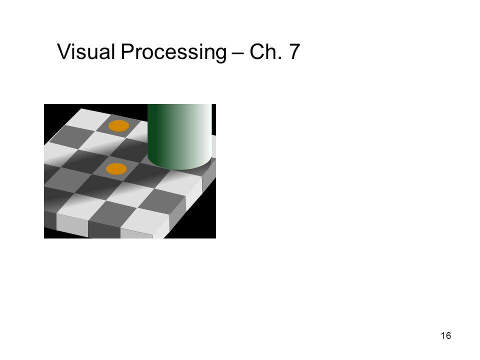 16 Visual Processing – Ch. 7