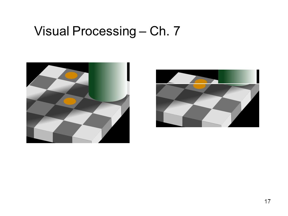 17 Visual Processing – Ch. 7