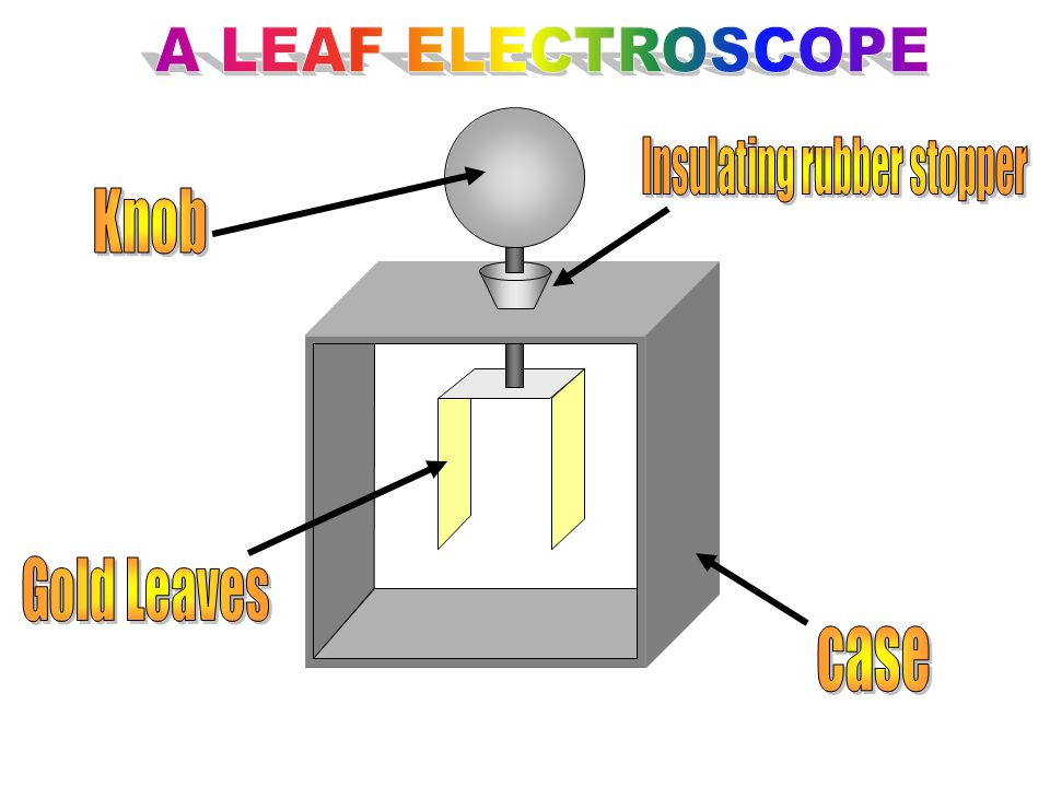 Rubber rod The electrons in the rubber rod are attracted to the NET POSITIVE knob of the electroscope.