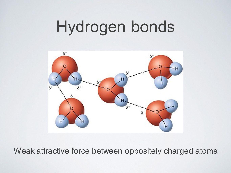Hydrogen bonds Weak attractive force between oppositely charged atoms