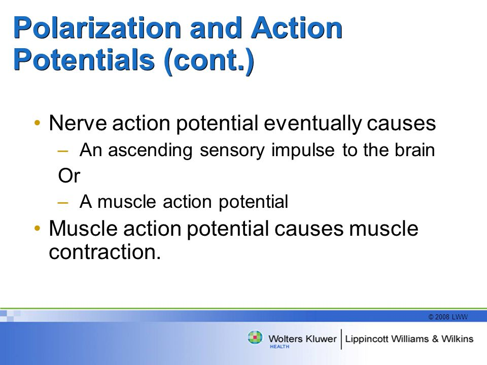 © 2008 LWW Polarization and Action Potentials (cont.) Nerve action potential eventually causes –An ascending sensory impulse to the brain Or –A muscle action potential Muscle action potential causes muscle contraction.