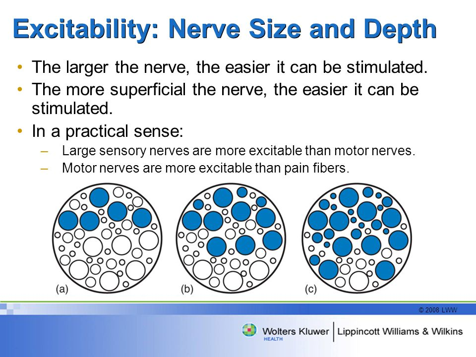 © 2008 LWW Excitability: Nerve Size and Depth The larger the nerve, the easier it can be stimulated.