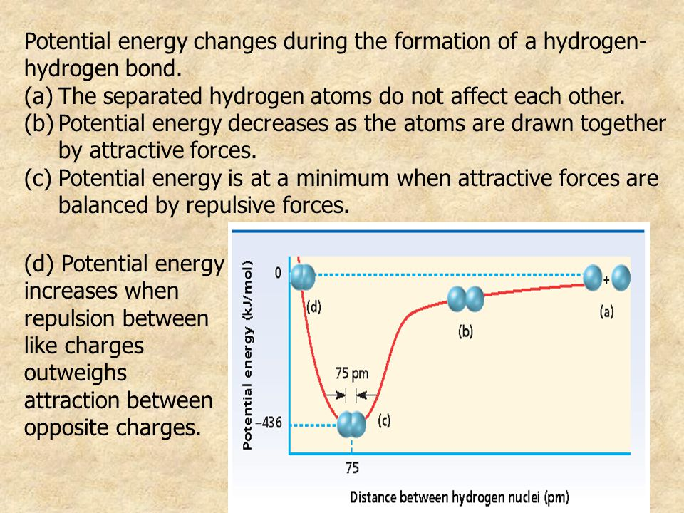 Potential energy changes during the formation of a hydrogen- hydrogen bond.