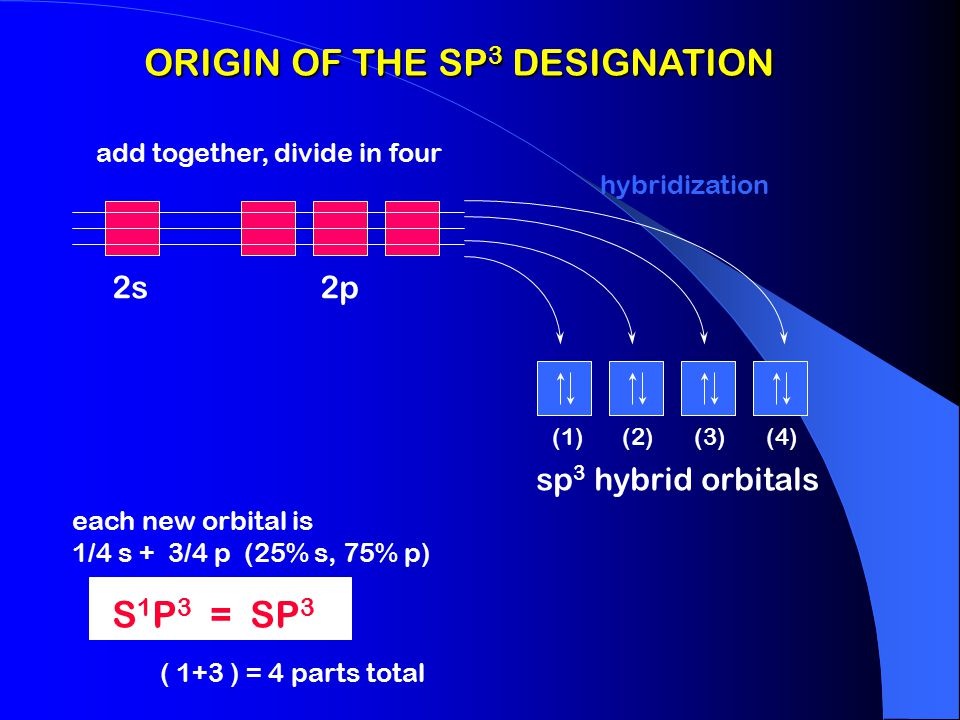 sp 3 SP 3 HYBRID ORBITAL The hybrid orbital has more density in the bonding lobe than a p orbital and forms stronger bonds. ( cross section ) The shap