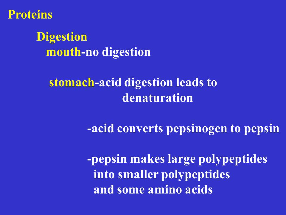 Proteins Digestion mouth-no digestion stomach-acid digestion leads to denaturation -acid converts pepsinogen to pepsin -pepsin makes large polypeptides into smaller polypeptides and some amino acids