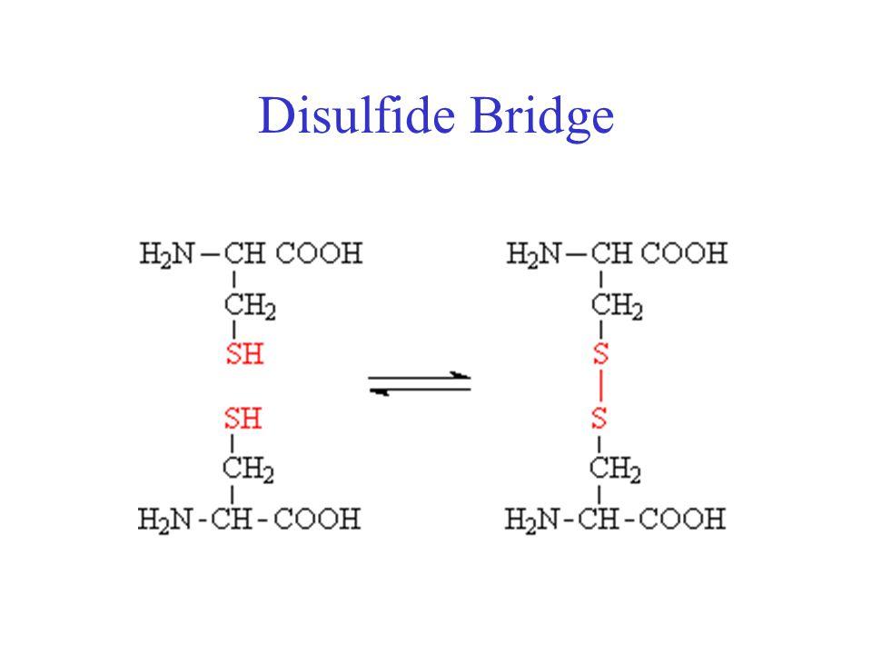 Disulfide Bridge