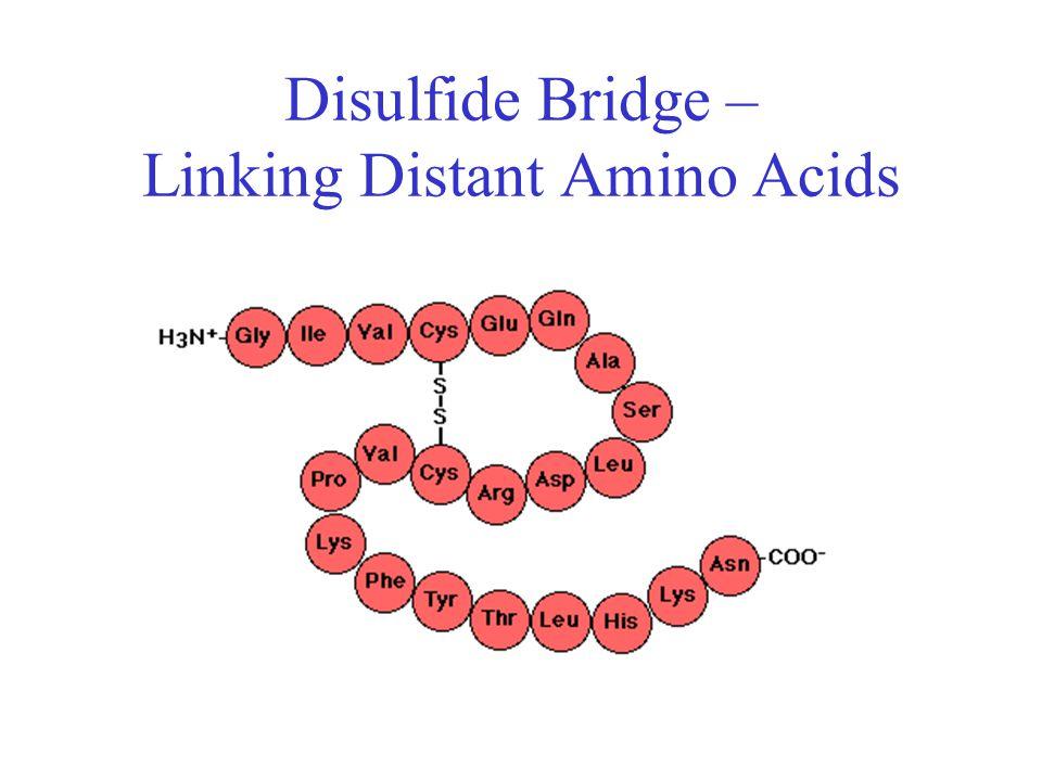 Disulfide Bridge – Linking Distant Amino Acids