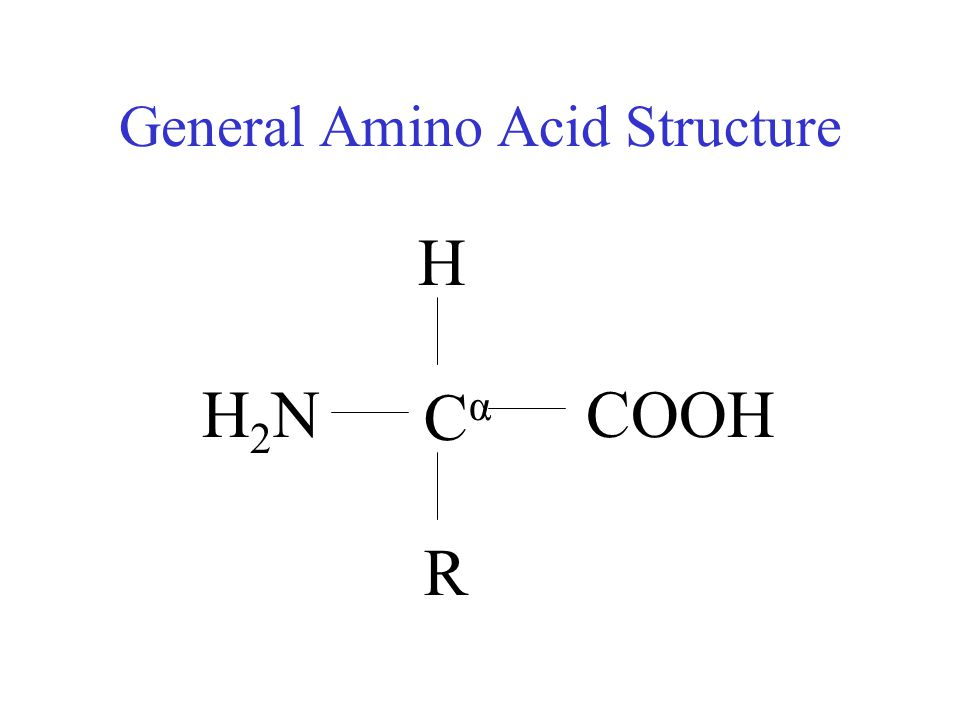 General Amino Acid Structure CαCα H R COOHH2NH2N