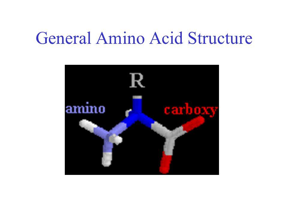 General Amino Acid Structure