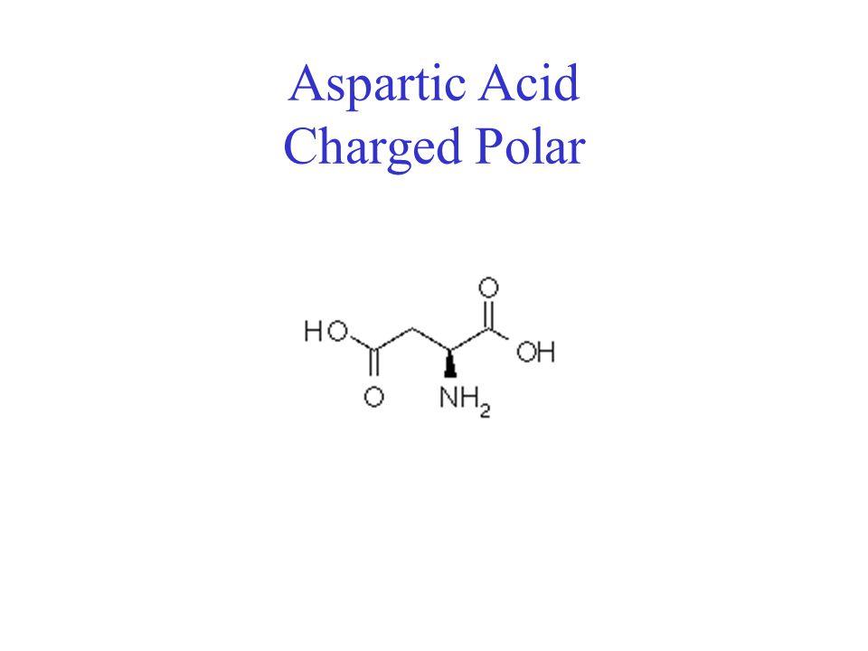 Aspartic Acid Charged Polar
