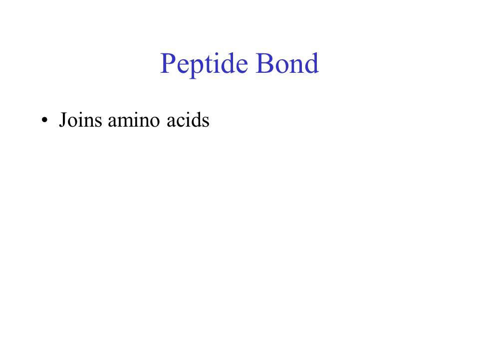Peptide Bond Joins amino acids
