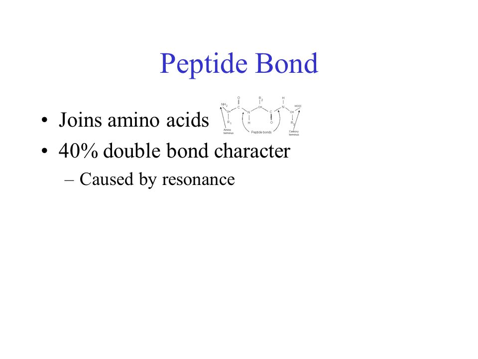 Peptide Bond Joins amino acids 40% double bond character –Caused by resonance