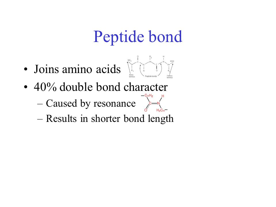 Peptide bond Joins amino acids 40% double bond character –Caused by resonance –Results in shorter bond length