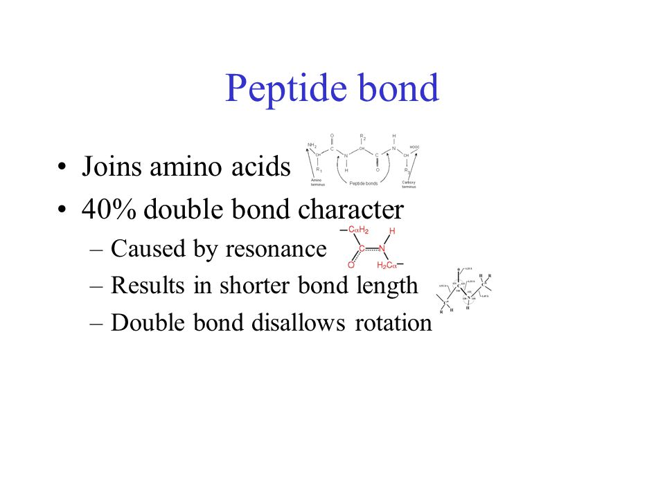 Peptide bond Joins amino acids 40% double bond character –Caused by resonance –Results in shorter bond length –Double bond disallows rotation