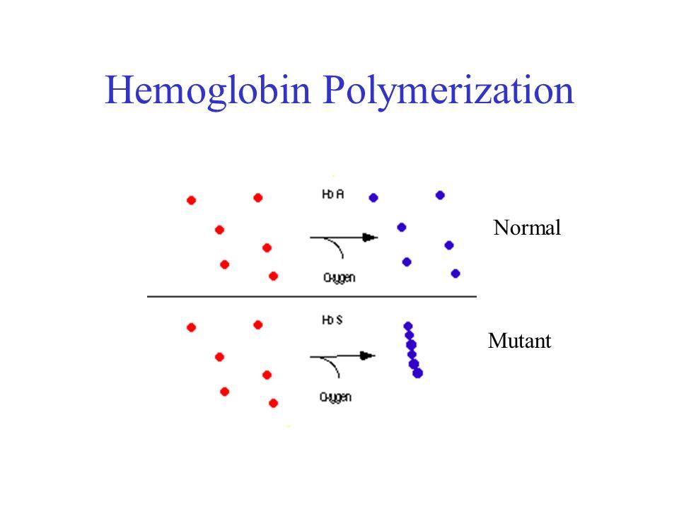 Hemoglobin Polymerization Normal Mutant