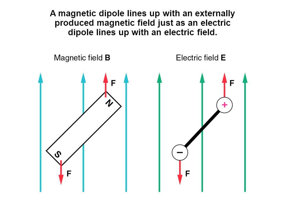 A magnetic dipole lines up with an externally produced magnetic field just as an electric dipole lines up with an electric field.