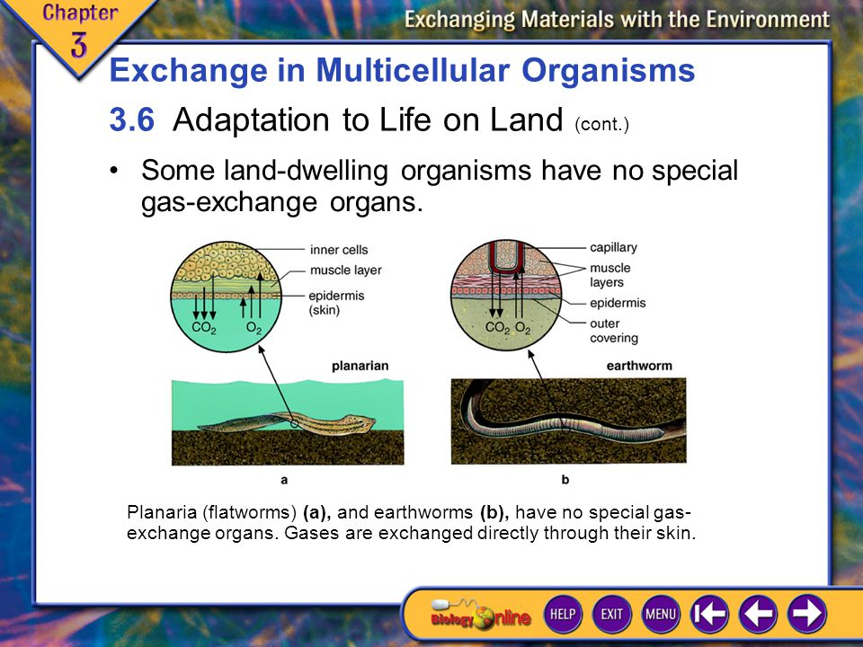 3.6 Adaptation to Life on Land 2 Some land-dwelling organisms have no special gas-exchange organs.