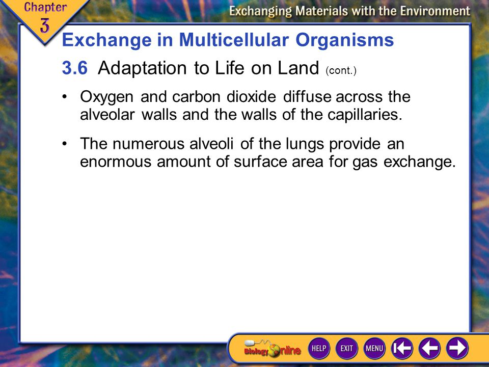 3.6 Adaptation to Life on Land 6 Oxygen and carbon dioxide diffuse across the alveolar walls and the walls of the capillaries.