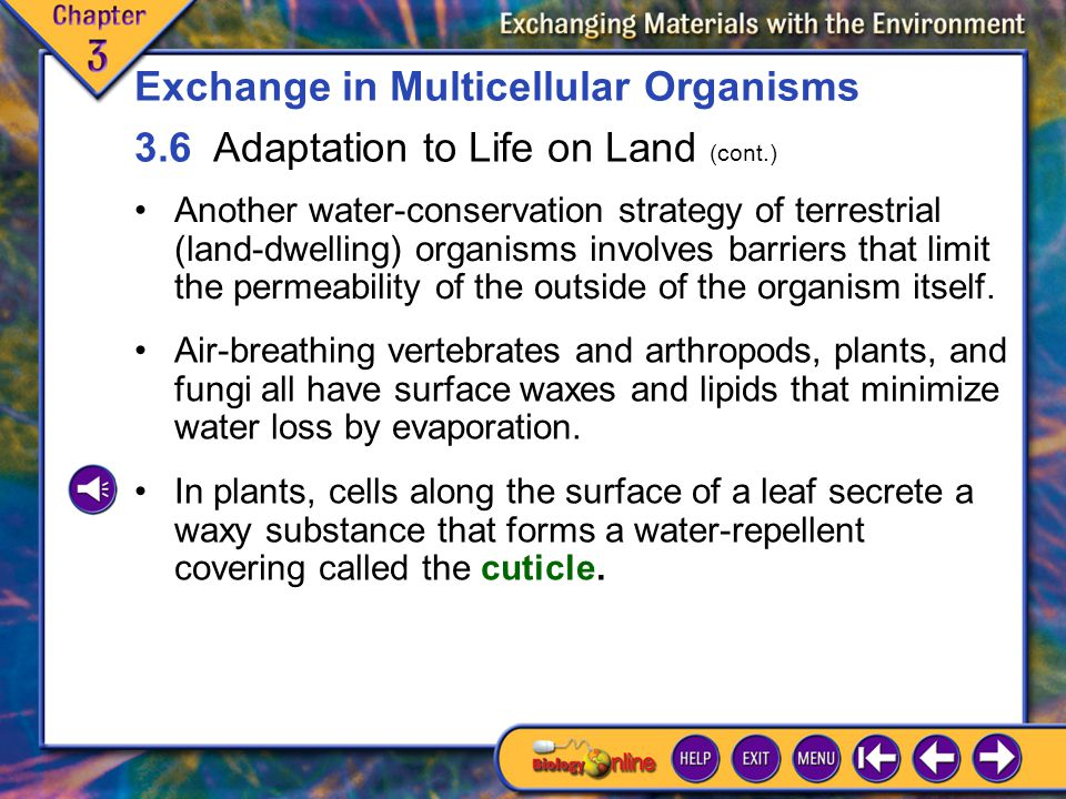 3.6 Adaptation to Life on Land 8 Another water-conservation strategy of terrestrial (land-dwelling) organisms involves barriers that limit the permeability of the outside of the organism itself.