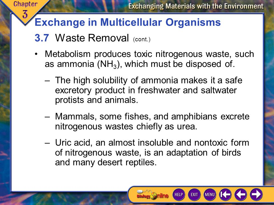 3.7 Waste Removal 4 Metabolism produces toxic nitrogenous waste, such as ammonia (NH 3 ), which must be disposed of.