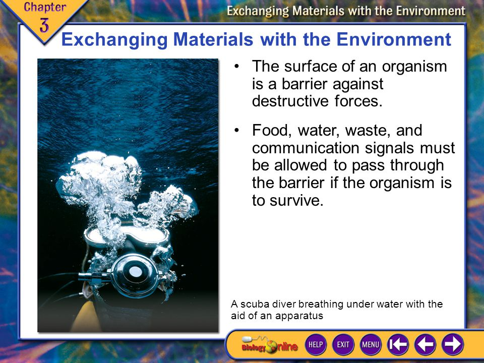 Chapter Introduction 2 Exchanging Materials with the Environment The surface of an organism is a barrier against destructive forces.