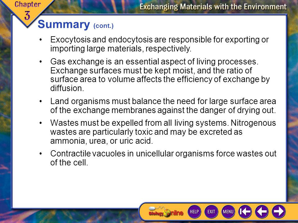 Chapter Highlights 2 Summary (cont.) Gas exchange is an essential aspect of living processes.