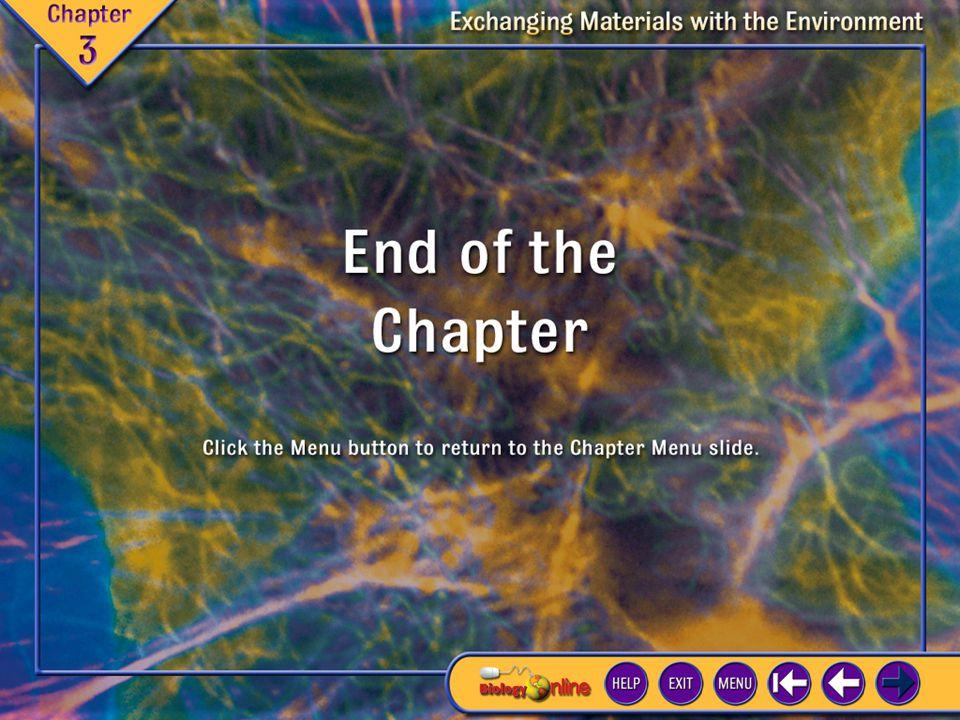 End of Chapter Presentation