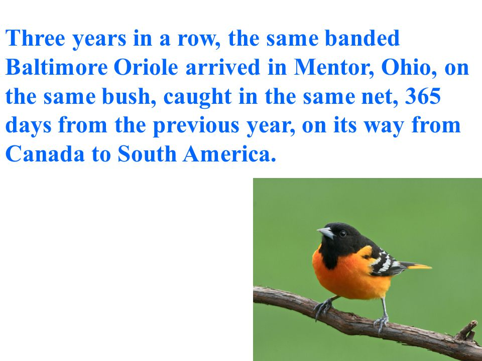 …to allow the Warbler to migrate each year from Toronto to South America navigating by the position of the stars.