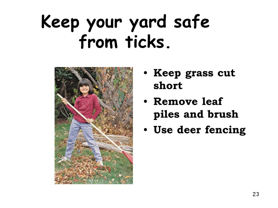 23 Keep your yard safe from ticks. Keep grass cut short Remove leaf piles and brush Use deer fencing