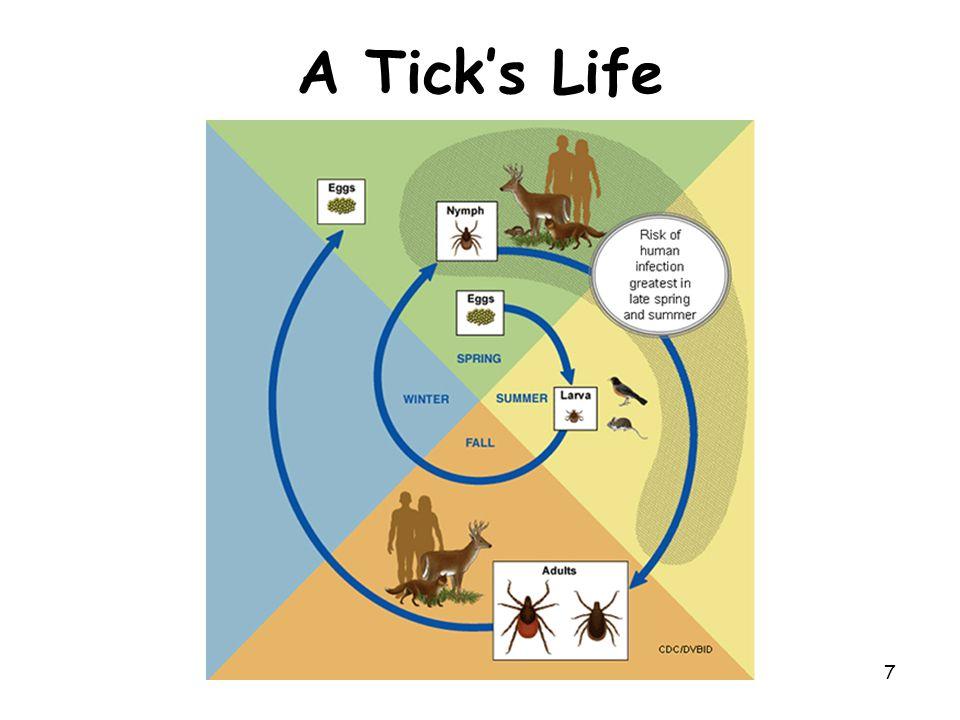 7 A Tick's Life
