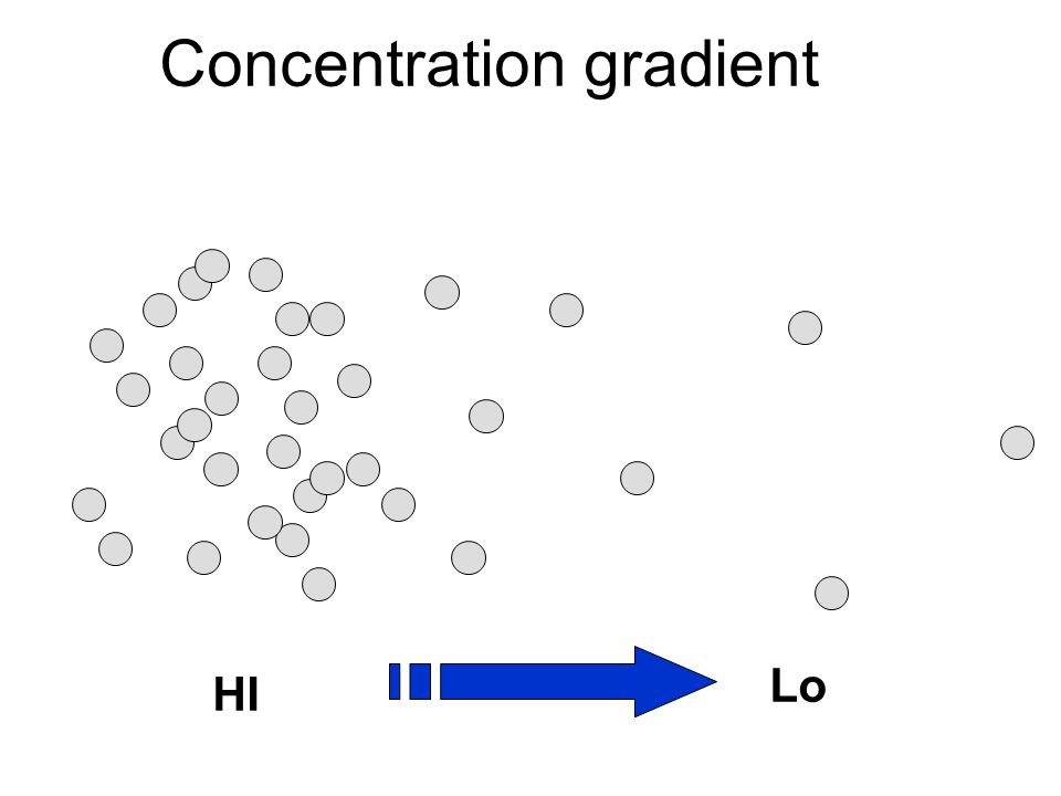 HI Lo Concentration gradient