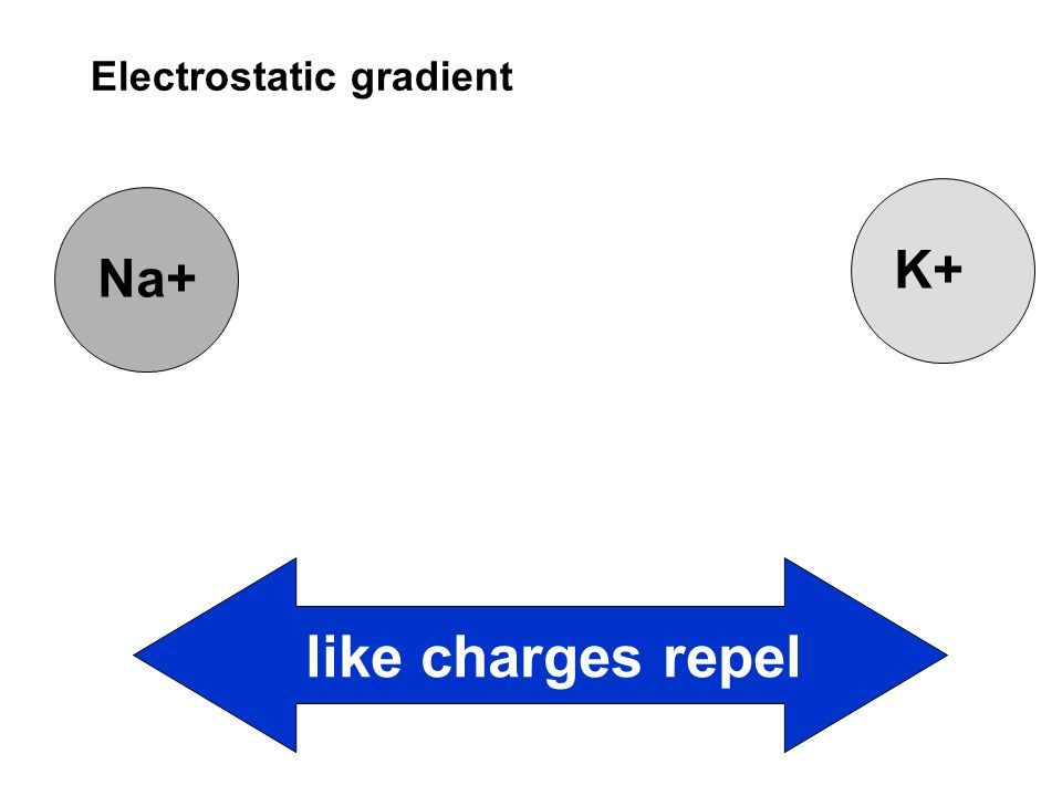 Na+K+ like charges repel Electrostatic gradient