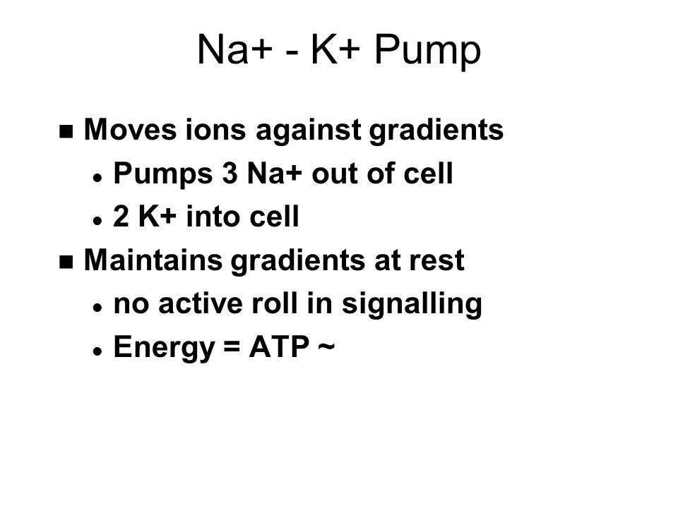 Na+ - K+ Pump n Moves ions against gradients l Pumps 3 Na+ out of cell l 2 K+ into cell n Maintains gradients at rest l no active roll in signalling l Energy = ATP ~