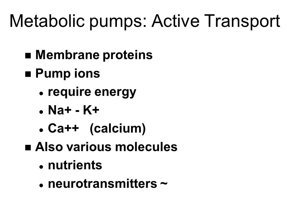 Metabolic pumps: Active Transport n Membrane proteins n Pump ions l require energy l Na+ - K+ l Ca++ (calcium) n Also various molecules l nutrients l