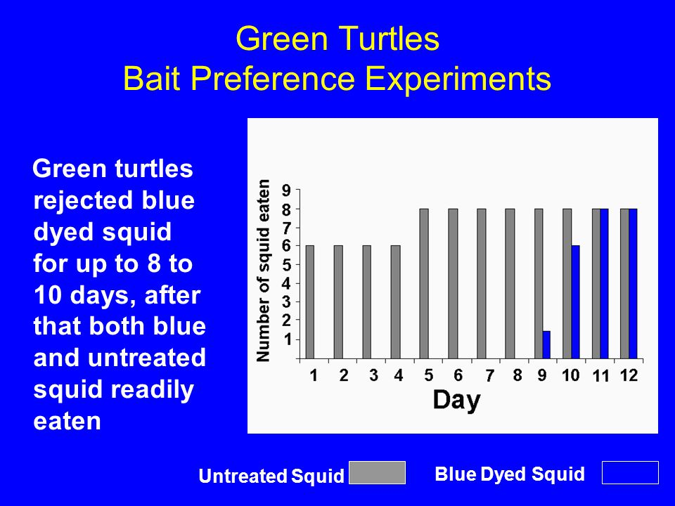 Green Turtles Bait Preference Experiments Green turtles rejected blue dyed squid for up to 8 to 10 days, after that both blue and untreated squid read