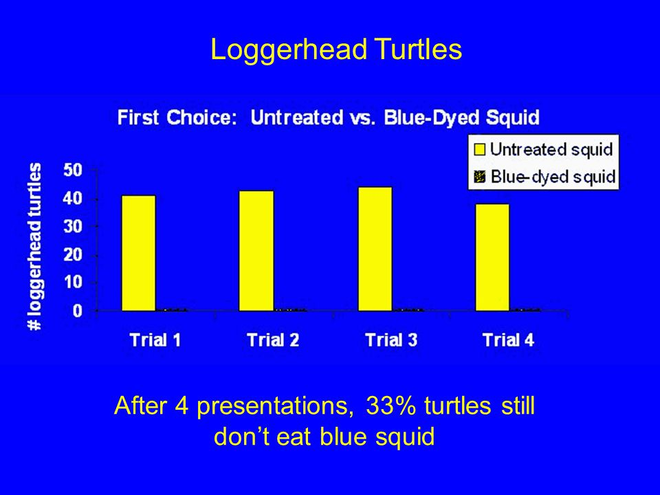 After 4 presentations, 33% turtles still don't eat blue squid Loggerhead Turtles