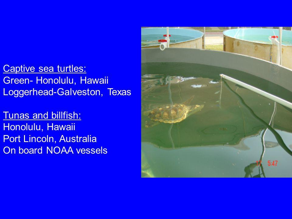 Captive sea turtles: Green- Honolulu, Hawaii Loggerhead-Galveston, Texas Tunas and billfish: Honolulu, Hawaii Port Lincoln, Australia On board NOAA vessels