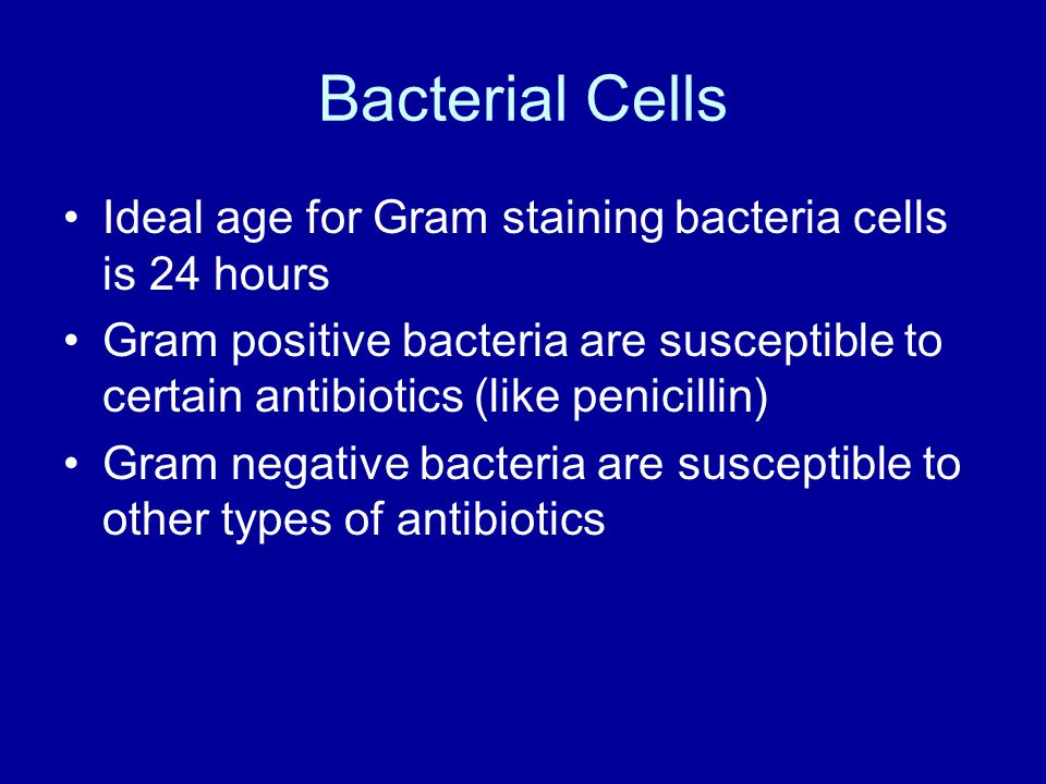Bacterial Cells Ideal age for Gram staining bacteria cells is 24 hours Gram positive bacteria are susceptible to certain antibiotics (like penicillin) Gram negative bacteria are susceptible to other types of antibiotics