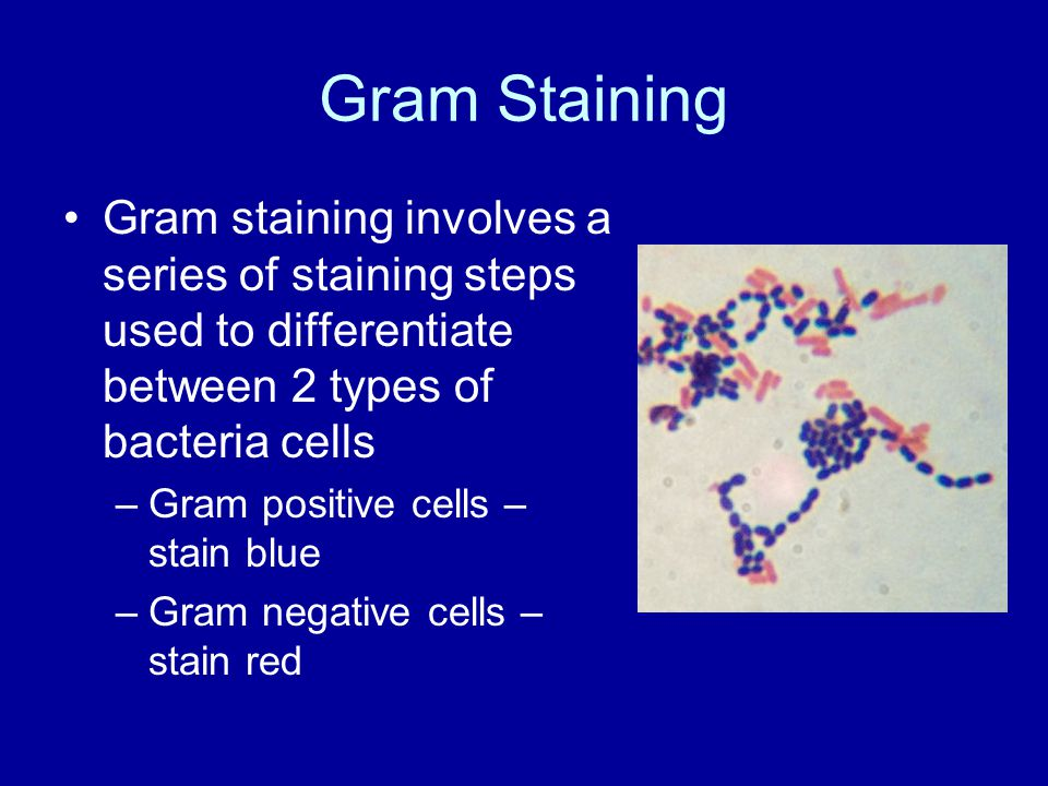 Gram Staining Gram staining involves a series of staining steps used to differentiate between 2 types of bacteria cells –Gram positive cells – stain blue –Gram negative cells – stain red