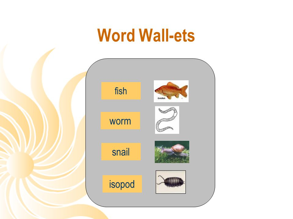 Word Wall-ets fish worm snail isopod
