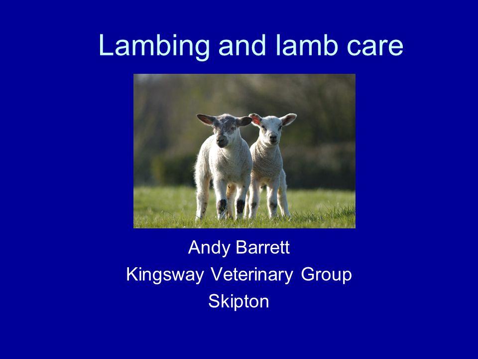 Lambing and lamb care Andy Barrett Kingsway Veterinary Group Skipton