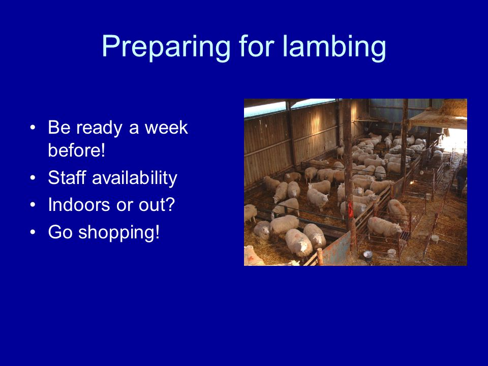 Preparing for lambing Be ready a week before! Staff availability Indoors or out Go shopping!