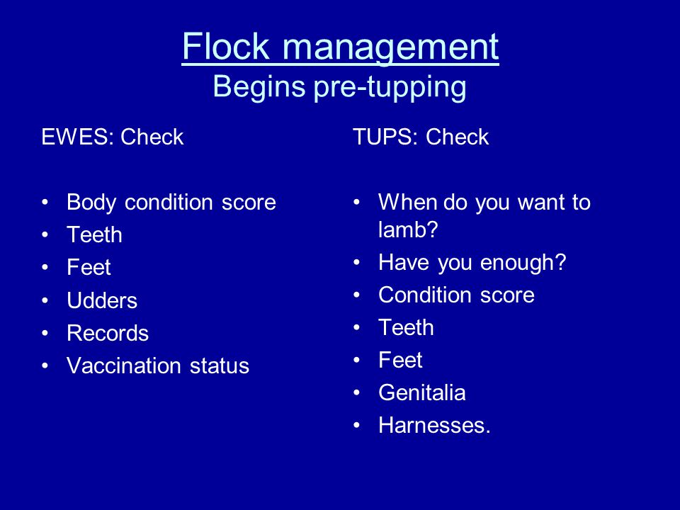 Flock management Begins pre-tupping EWES: Check Body condition score Teeth Feet Udders Records Vaccination status TUPS: Check When do you want to lamb.