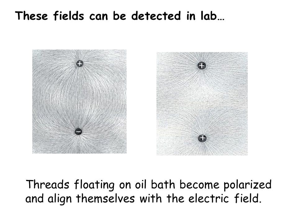 Threads floating on oil bath become polarized and align themselves with the electric field. These fields can be detected in lab…