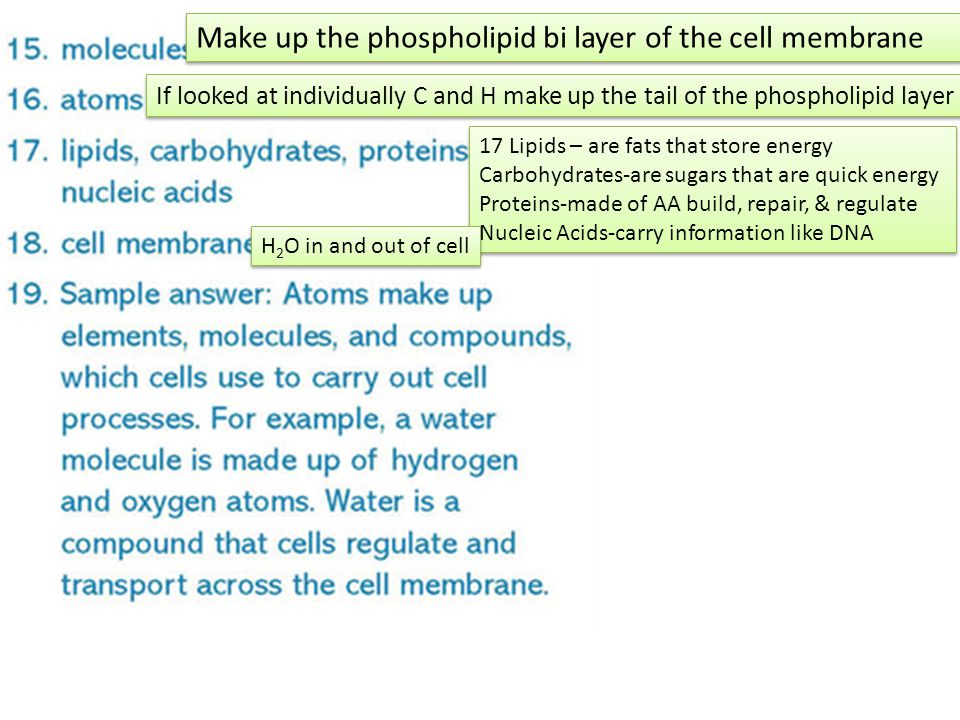 Make up the phospholipid bi layer of the cell membrane If looked at individually C and H make up the tail of the phospholipid layer 17 Lipids – are fats that store energy Carbohydrates-are sugars that are quick energy Proteins-made of AA build, repair, & regulate Nucleic Acids-carry information like DNA 17 Lipids – are fats that store energy Carbohydrates-are sugars that are quick energy Proteins-made of AA build, repair, & regulate Nucleic Acids-carry information like DNA H 2 O in and out of cell