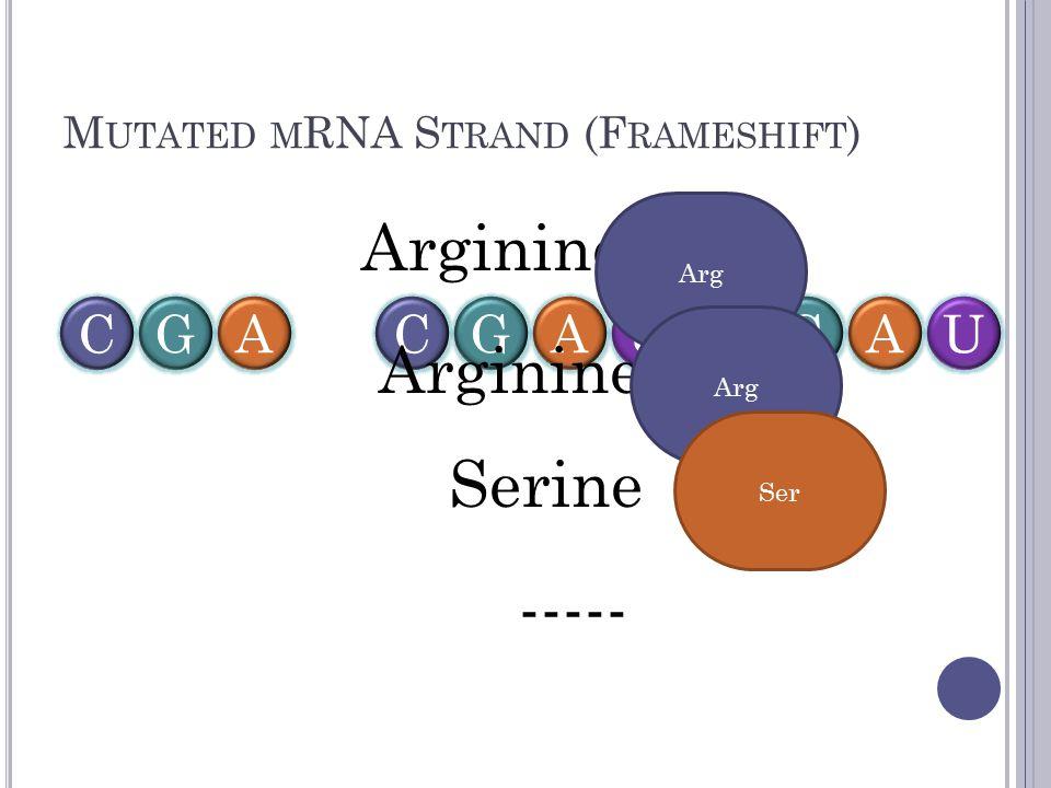 M UTATED M RNA S TRAND (F RAMESHIFT ) CGACGACGAUU Arginine Serine ----- Arg Ser