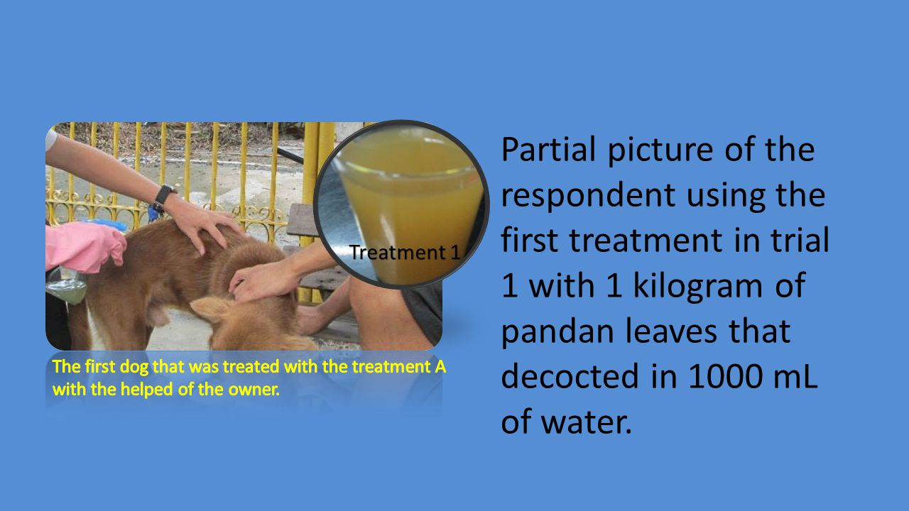 Partial picture of the respondent using the first treatment in trial 1 with 1 kilogram of pandan leaves that decocted in 1000 mL of water.