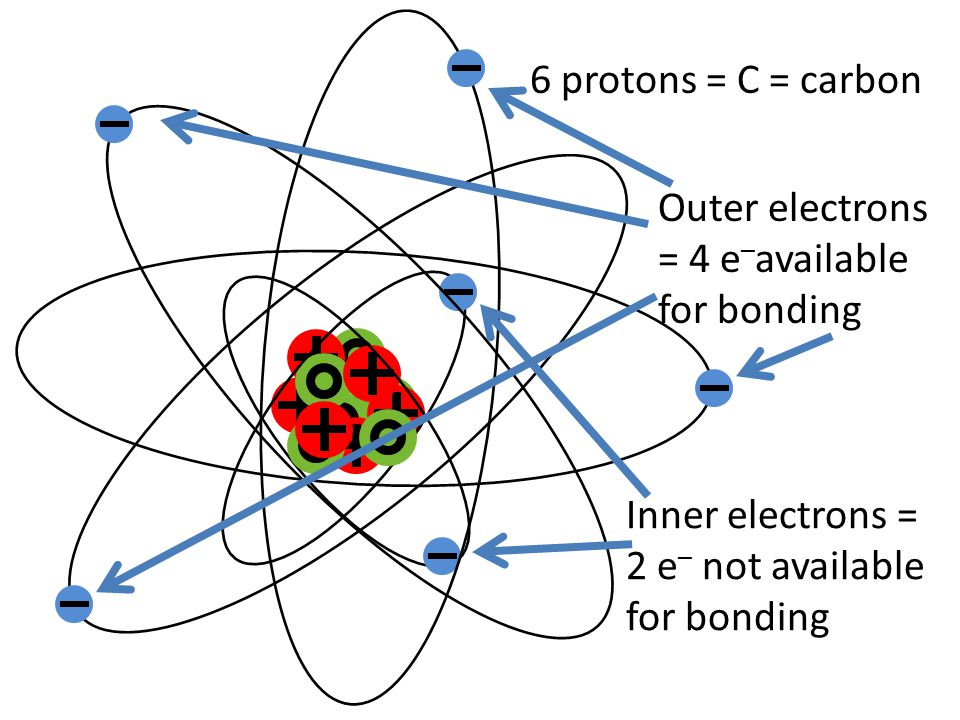6 protons = C = carbon Inner electrons = 2 e – not available for bonding Outer electrons = 4 e – available for bonding