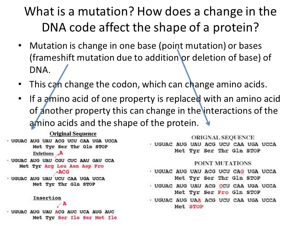 What is a mutation? How does a change in the DNA code affect the shape of a protein? Mutation is change in one base (point mutation) or bases (framesh