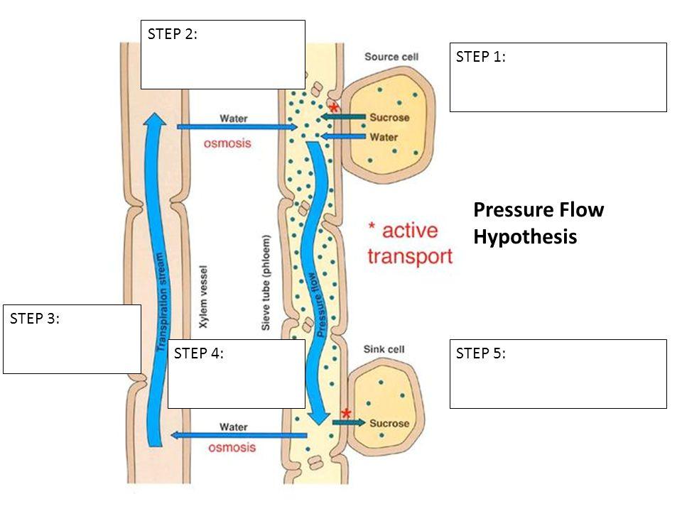 STEP 1: STEP 2: STEP 3: STEP 4:STEP 5: Pressure Flow Hypothesis